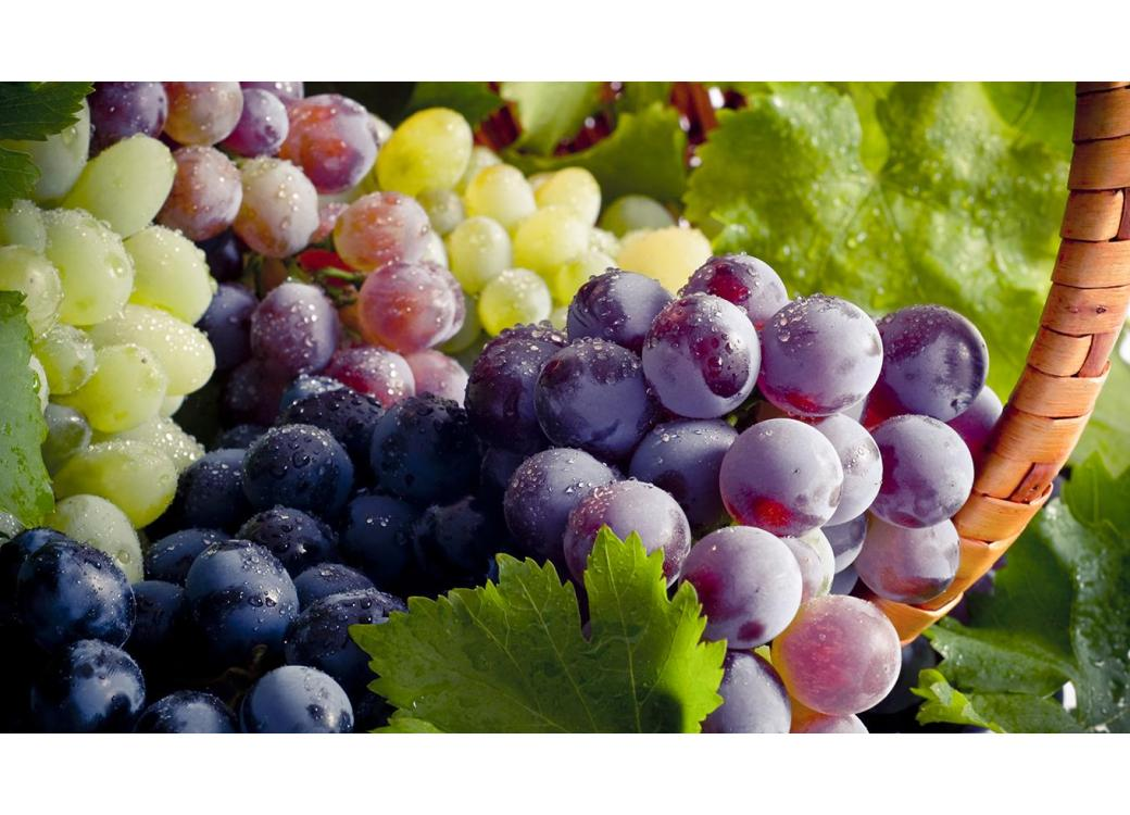Benefits of Grape Seed Extract — Nature's Master Multitasker